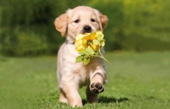 Cute Puppy Running Spring Dog 341 220