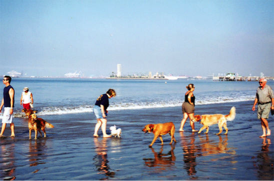 Everyone Enjoys A Day At The Beach Rosie S Dog Is 2 9 Acres Of Ocean Summer Bliss You Can Even Catch Some Rays While Your Splashes In